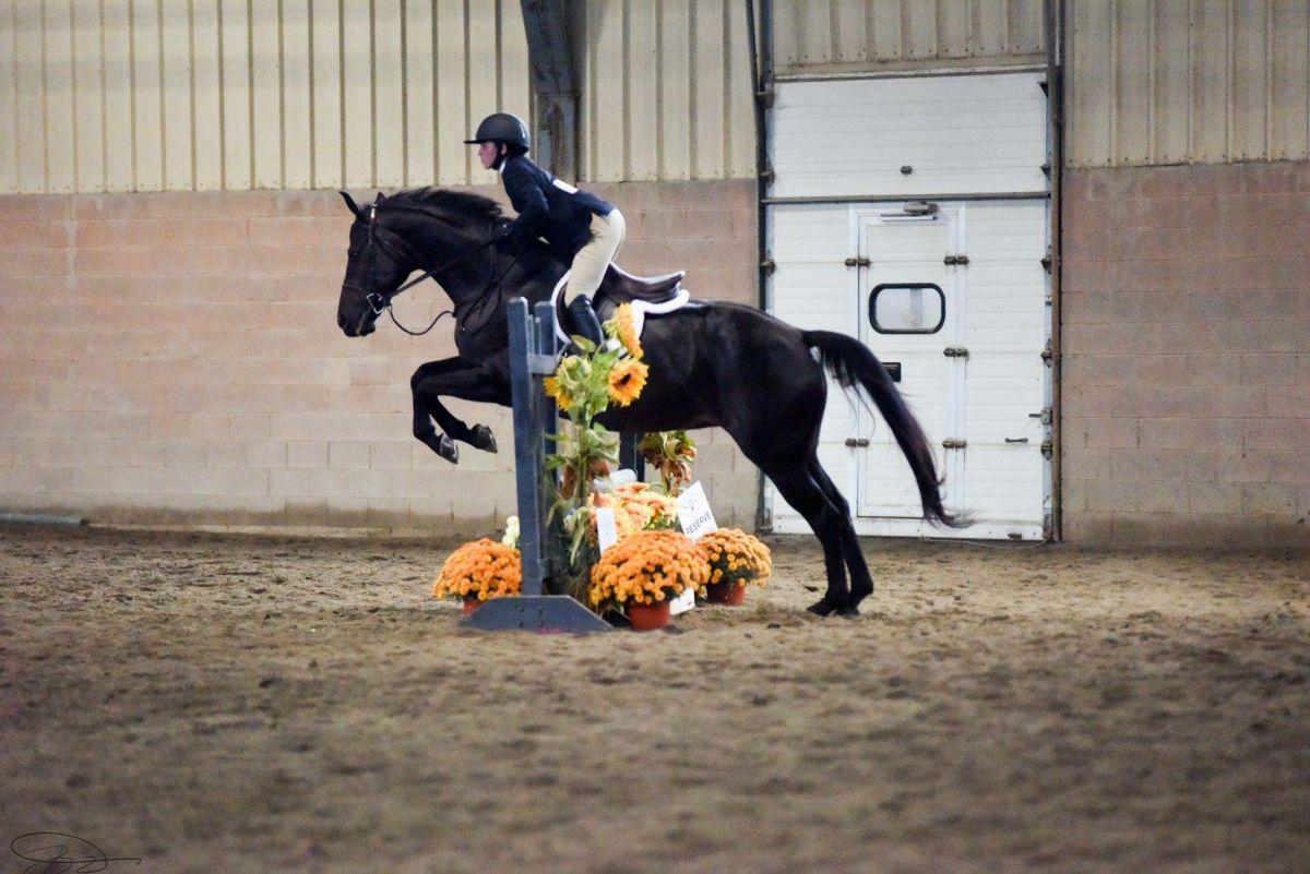 North Jersey Equestrian Center || The Tri-State Premier Riding Center